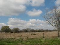 2008-03-11-115.jpg